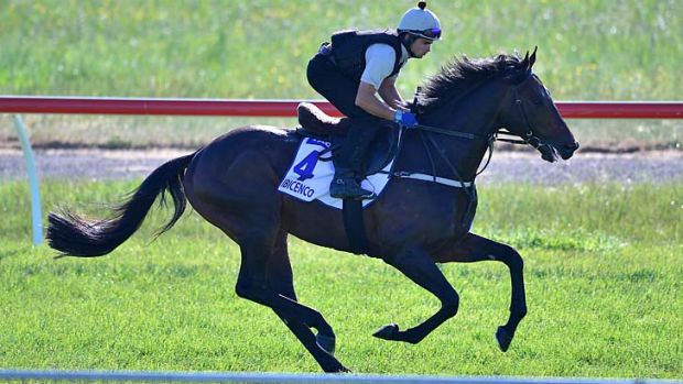 Ibicenco is one of the imported horses in the Sandown Cup.