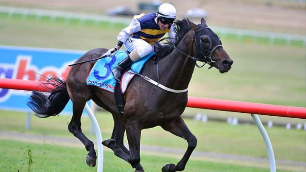 The Sandown Cup is won by Ibicenco ridden by Glen Boss.