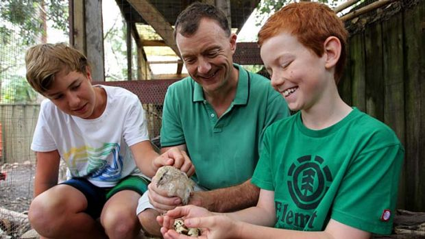 Andrew Timmis with sons, Jack and Will (in green) at their Sydney home with their quails.