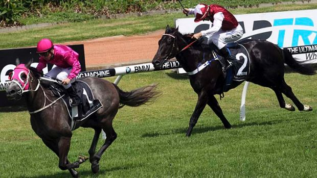 Jockey Shaun Guymer rides Catkins (left) to victory ahead of Furious Jet (not in pic) and Sessions (right).