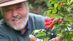 Native herb basket ... Mike Quarmby with a riberry plant.