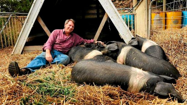 Michael Croft with some of his Wessex saddlebacks.