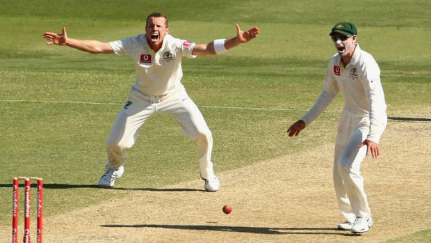 Giving his all: Peter Siddle has bowled almost twice as many overs as recommended.