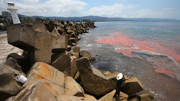 Red sea ...  the scene today outside the breakwall of Wollongong Harbour.