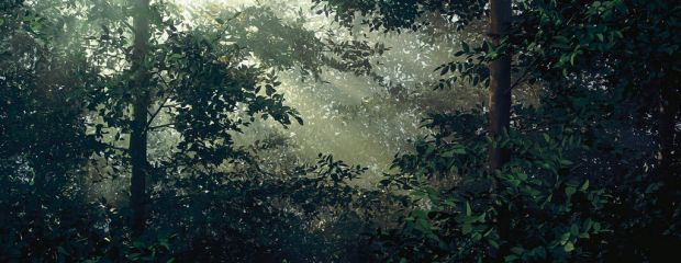 Thomas Demand's Lichtung (Clearing), 2003.