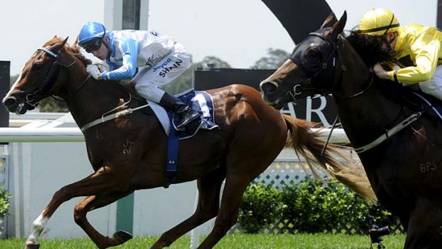 Reward … Blake Shinn keeps an eye on the fast-finishing Napayshini while riding All The Talk to victory at Warwick ...