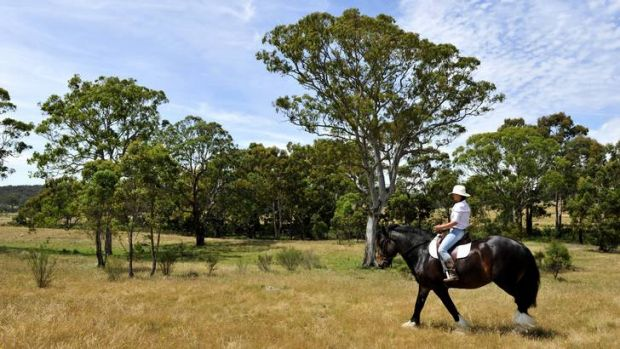 Owner of a stud horse farm near Bungendore, Lisa Wilson and her rare Shire Horse, Jock.
