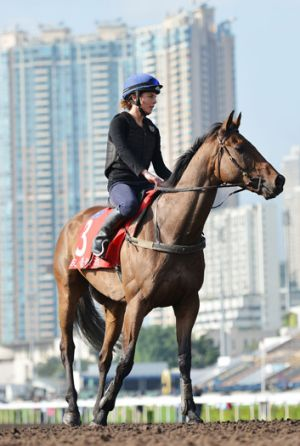 Ready and able... Jockey Craig Williams believes Alcopop is raring to to perform at the Hong Kong Cup.