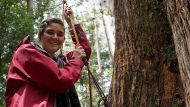 Miranda Gibson images show her residing in the tree located in Tasmania. IMAGE SOURCE www.observertree.org for Andrew ...
