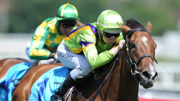 Home you go: Damian Lane guides Secret Liaison to victory at Caulfield last Saturday.