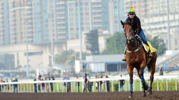 Siren Sound ... John O'Shea's Sea Siren is put through her paces on the all weather track at Sha Tin in the lead-up to ...