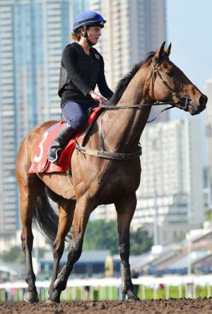 Flying the flag: Australia's two Hong Kong hopes, Alcopop (above), who will contest the Hong Kong Cup, and Sea Siren ...