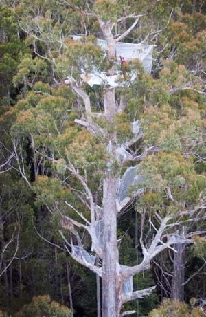 Lonely at the top … forestry activist Miranda Gibson.