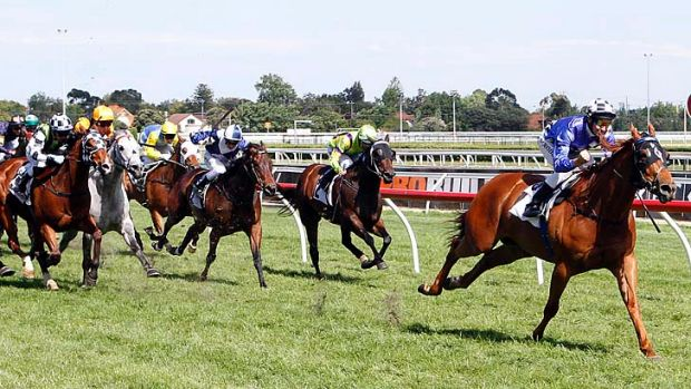 As if by slingshot: Catapulted, with Michael Rodd aboard, races clear to win the Doveton Stakes at Caulfield on Saturday.