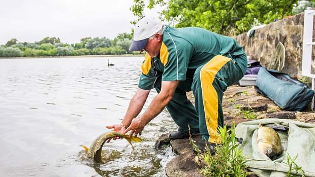 Freedom … Alan Wood releases a fish he caught.