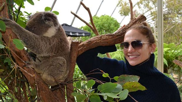 Up close and personal ... Jennifer Lopez cozies up to a furry friend at Wild Life Sydney Zoo on Saturday.