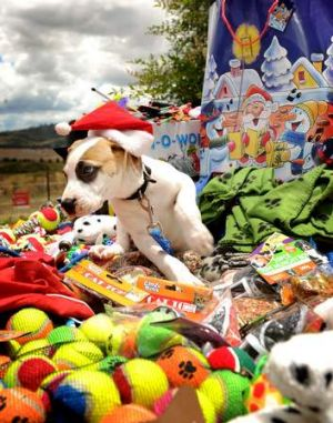 A lovable pup from the Weston RSPCA takes stock of the Christmas presents provided by Marco.