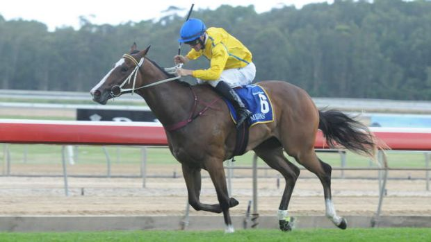 Peter Robl rides Assail in the Wyong 2YO Magic Millions on Thursday.