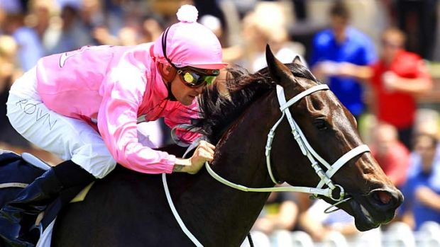 Corks a poppin' ... Corey Brown drives Champagne Cath to the line hands and heels at Rosehill earlier this month. The ...