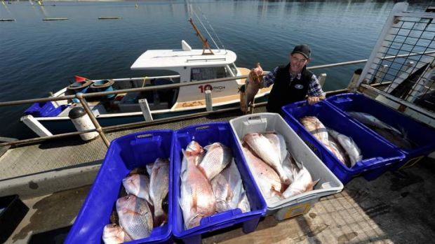Commercial fisherman Dugga Beazley, 73, and his early-morning catch of snapper from Port Phillip Bay
