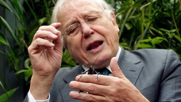 Sir David Attenborough has been educating us for decades.