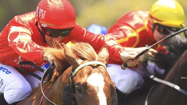 Red alert ... Glyn Schofield drives Dothraki to victory at Canterbury on Saturday.