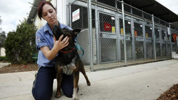 Animal care assistant Tara McMahon with 'Hokee', one of the many abandoned animals at the RSPCA ACT Animal Shelter in Weston.