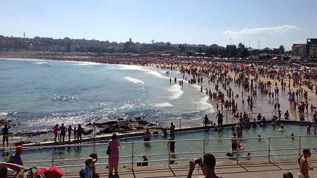 Shark scare ... beachgoers have evacuated the water at Bondi Beach