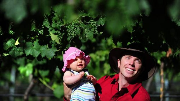 VINE GENES: Eloise Collingwood, 7 months, and her father John Collingwood look at grapes at Four Winds Vineyard, ...
