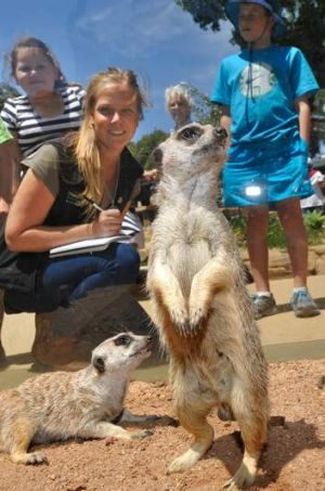 Sally Sherwen watches the meerkats interact with their human visitors at Melbourne Zoo.
