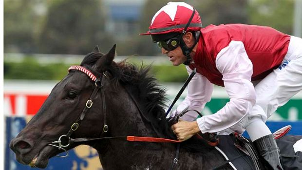 Redemption awaits … Lonhro colt Sessions is in the 1000 metre scamper (race four) at Warwick Farm.
