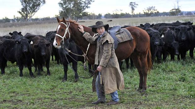 Affinity … Jim Bowman at ''Merotherie'' at Dunedoo musters steer to send them to feedlot.