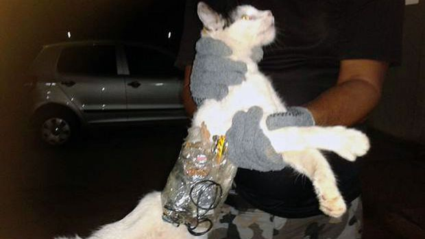 Caught ... a penitentiary agent holding a cat with a package of tools and a mobile phone tied to its body at Luiz de ...