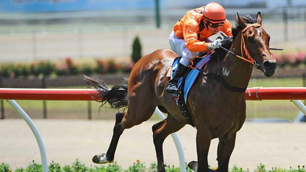 Now that's smart … Clevadude wins at Moonee Valley last month.