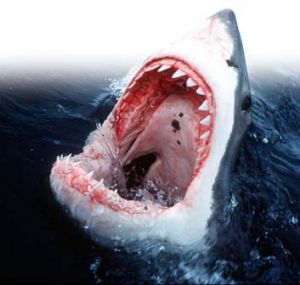 Shark reality ... are the odds of a shark attack as low as we think?