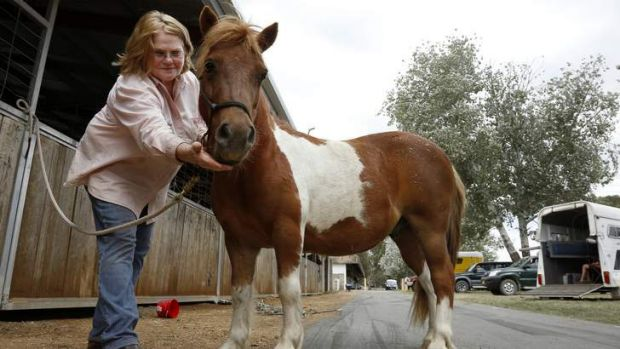 Judith Winter of Mount Fairy and her miniature horse Rebel.
