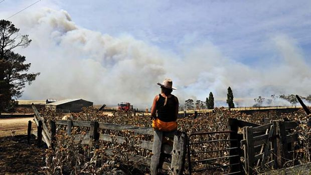 Watching and waiting ... a break from the fighting as the Rural Fire Service moves in to tackle fires on Mount Forest ...