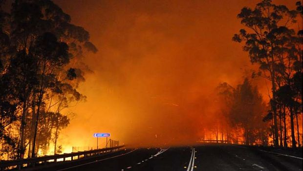 A bushfire in Shoalhaven crosses the Princes Highway on Tuesday night.