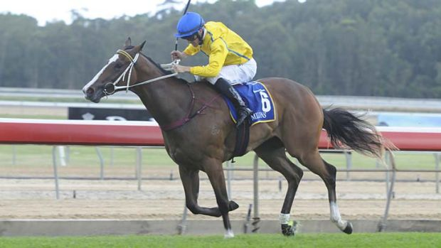 Gold class … Magic Millions Classic favourite Assail enhanced her reputation as one of the country's best ...