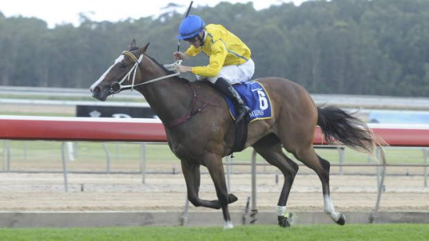 Jockey Peter Robl rides Assail to victory at Wyong in a Magic Millions qualifier.