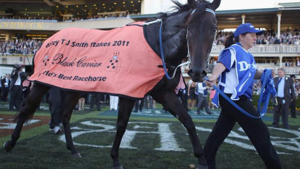 Canberrans would love to see the great Black Caviar.