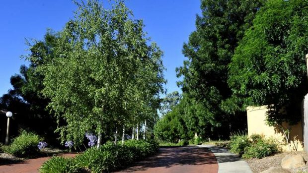 Residents of The Gardens in Nicholls are at war over whether to remove Manchurian pear and claret ash trees, like the ...