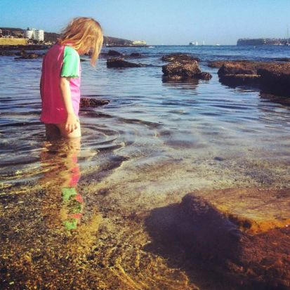 Sydney rock pool life. Photo : Anna Todd