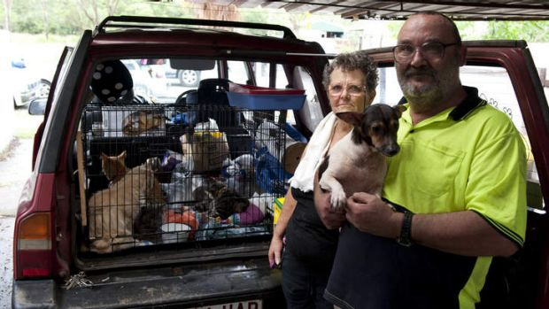 Lynette and Allan Kunst gather their animals as they prepare to evacuate their Ipswich home.