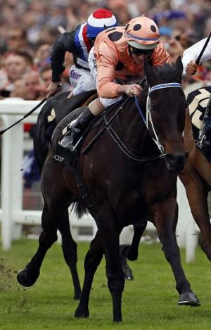 """You just don't realise how much you miss seeing her"" ...  Gary Wilkie on Black Caviar, pictured."
