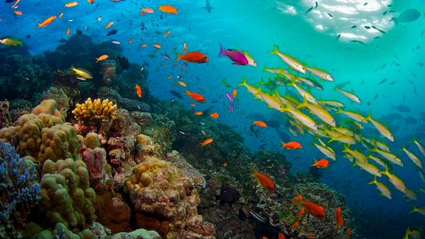 The Great Barrier Reef is under threat, conservation groups say.
