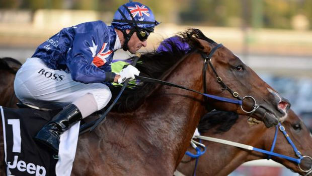 Second best? Shamexpress will take on mighty mare Black Caviar in the Lightning Stakes.