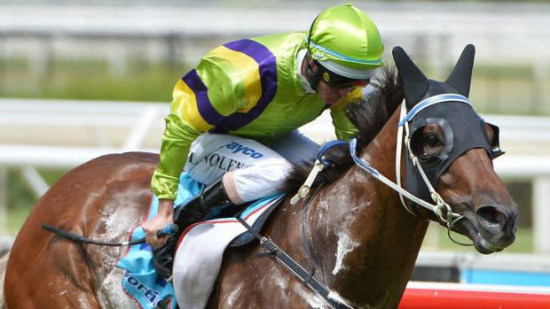 Ghost of a chance: Royal Haunt powers to victory in the Manfred Stakes at Caulfield on Saturday.