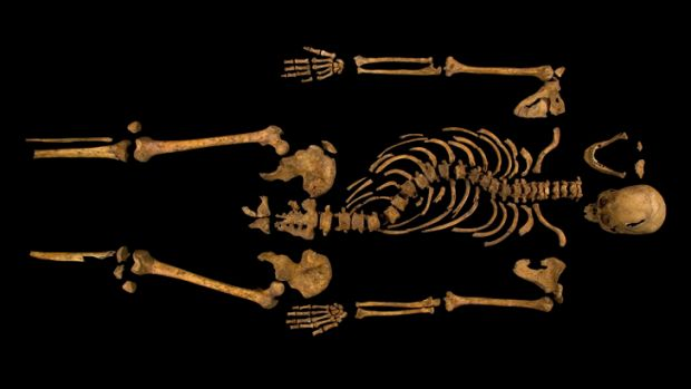 The skeleton of Richard III, which was discovered at the Grey Friars excavation site in Leicester.