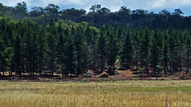 Work has begun about 500 metres from the existing Majura road.